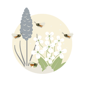 Wildbienen Illustration Bestäubung Blumen