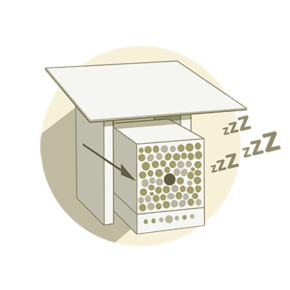 Winterschlaf Illustration Wildbienen