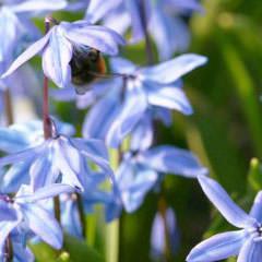 Blumen und Stauden für Wildbienen